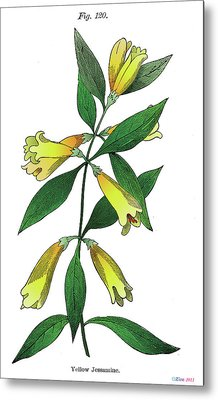 Yellow Jessamine Metal Print by Ziva