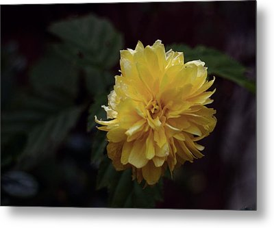 Metal Print featuring the photograph Yellow by Keith Elliott