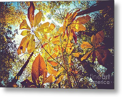 Yellow Leaves Of Fall Metal Print