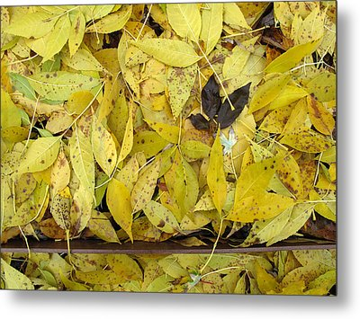 Yellow Leaves On The Ground  Metal Print by Lyle Crump