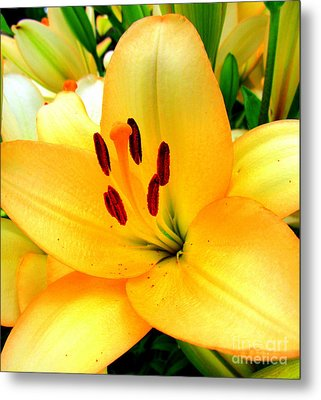 Metal Print featuring the photograph Yellow Lilies 1 by Randall Weidner