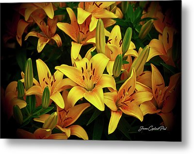 Metal Print featuring the photograph Yellow Lilies by Joann Copeland-Paul