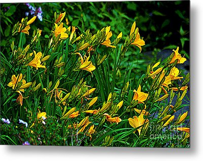 Metal Print featuring the photograph Yellow Lily Flowers by Susanne Van Hulst
