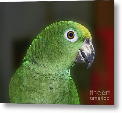Metal Print featuring the photograph Yellow Naped Amazon Parrot by Smilin Eyes  Treasures