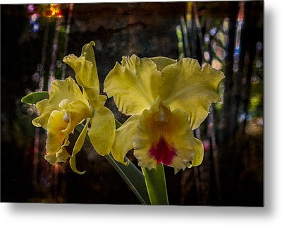 Yellow Orchids Metal Print by Debra and Dave Vanderlaan