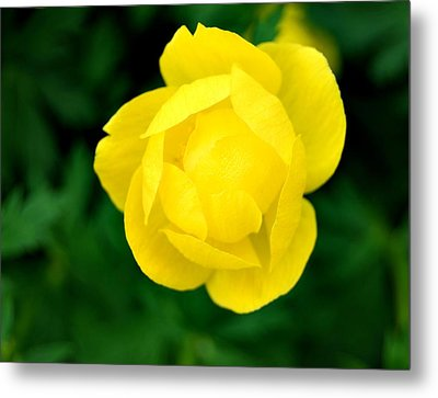 Yellow Petals Metal Print by Marilynne Bull