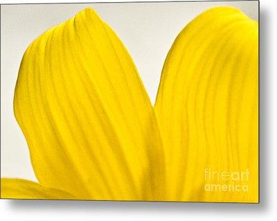 Yellow Petals Metal Print by Ryan Kelly