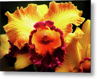 Metal Print featuring the photograph Yellow-purple Orchid by Anthony Jones