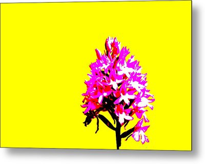 Yellow Pyramid Orchid Metal Print by Richard Patmore