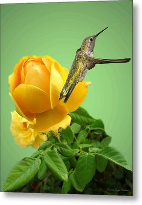 Yellow Rose And Hummingbird 2 Metal Print