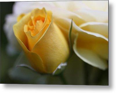 Yellow Rose Bud Flower Metal Print by Jennie Marie Schell