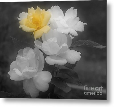 Metal Print featuring the photograph Yellow Rose Cluster Partial Color by Smilin Eyes  Treasures