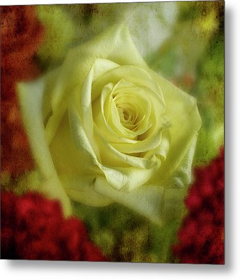 Yellow Rose Metal Print by Garry McMichael