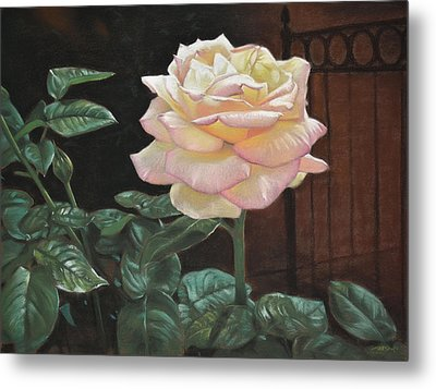 Yellow Rose Of Texas Metal Print by Christopher Reid