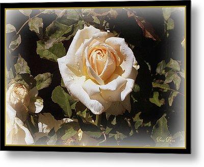 Yellow Rose Of Texas Metal Print by Trina Prenzi