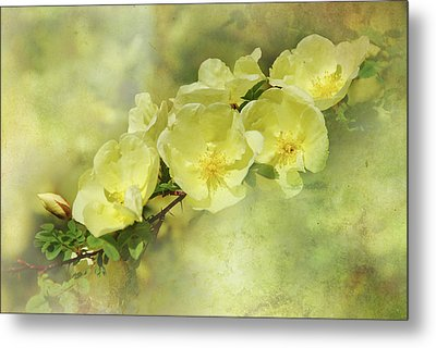 Yellow Roses Metal Print by Elaine Manley