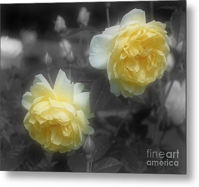 Metal Print featuring the photograph Yellow Roses Partial Color by Smilin Eyes Treasures