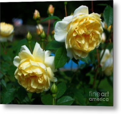 Metal Print featuring the photograph Yellow Roses by Smilin Eyes  Treasures
