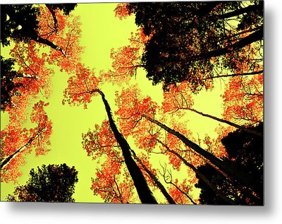 Metal Print featuring the photograph Yellow Sky, Burning Leaves by Kevin Munro