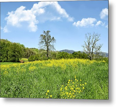 Yellow Spring Metal Print by Susan Leggett