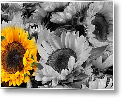 Yellow Sunflower On Black And White Metal Print by Dora Sofia Caputo Photographic Art and Design