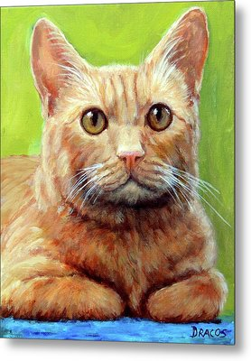 Yellow Tabby Cat Hands Folded Metal Print by Dottie Dracos