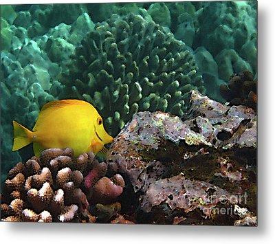 Yellow Tang On The Reef Metal Print by Bette Phelan