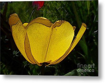 Yellow Tulip 2 Metal Print by Jean Bernard Roussilhe