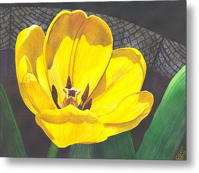 Yellow Tulip Metal Print by Catherine G McElroy