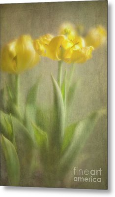 Metal Print featuring the photograph Yellow Tulips by Elena Nosyreva