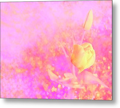 Yellow Tulips Metal Print by Nat Air Craft