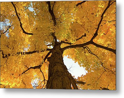 Yellow Up Metal Print by Steve Stuller