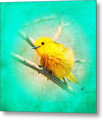 Metal Print featuring the photograph Yellow Warbler by John Wills