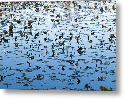 Yellow Water Lilies In Deep Silhouette Metal Print