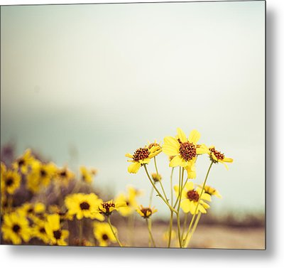 Metal Print featuring the photograph Yellow Wildflowers by Mary Hone