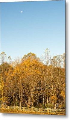 Yellow Yellow Everywhere - Natchez Trace Metal Print by Debra Martz