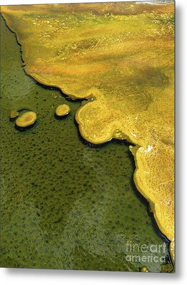 Yellowstone Art. Yellow And Green Metal Print by Ausra Huntington nee Paulauskaite