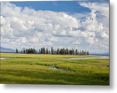 Yellowstone Meadow Metal Print