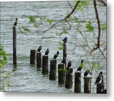 York River Cormorants Metal Print