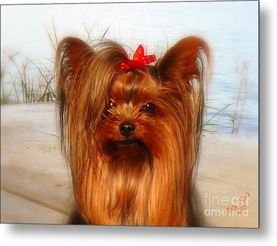 Yorkie Princess Metal Print
