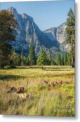 Yosemite Valley At Yosemite National Park Metal Print