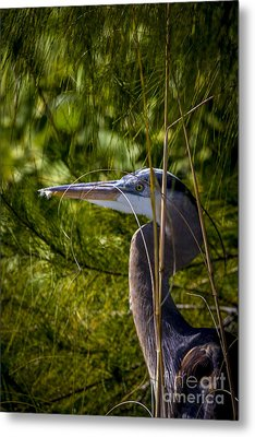 You Can't See Me Metal Print by Marvin Spates