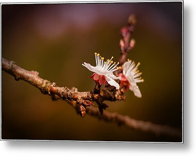 Metal Print featuring the photograph You Make Me Blossom by Tim Nichols