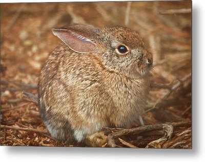 Young Cottontail In The Morning Metal Print