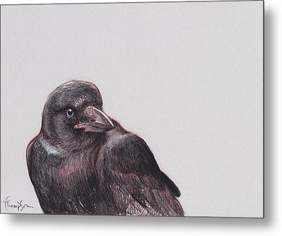 Young Crow 2 Metal Print by Tracie Thompson