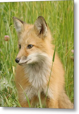 Metal Print featuring the photograph Young Fox by Doris Potter
