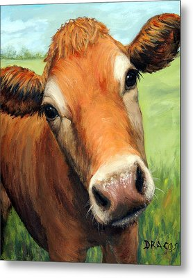 Young Jersey Cow In Field Metal Print by Dottie Dracos