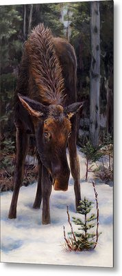 Young Moose And Pussy Willows Springtime In Alaska Wildlife Painting Metal Print by Karen Whitworth