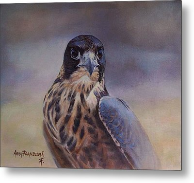 Young Peregrine Falcon Metal Print by Anna Franceova