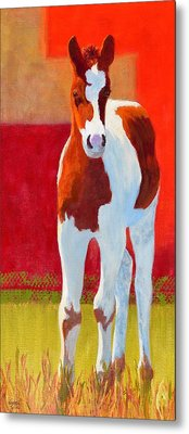 Young Pinto Metal Print by Nancy Jolley